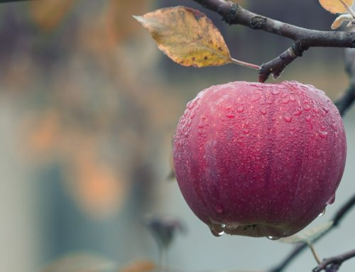 Did you know apples help ease nausea?