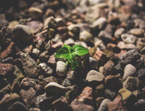 Planting seeds beyond Movember